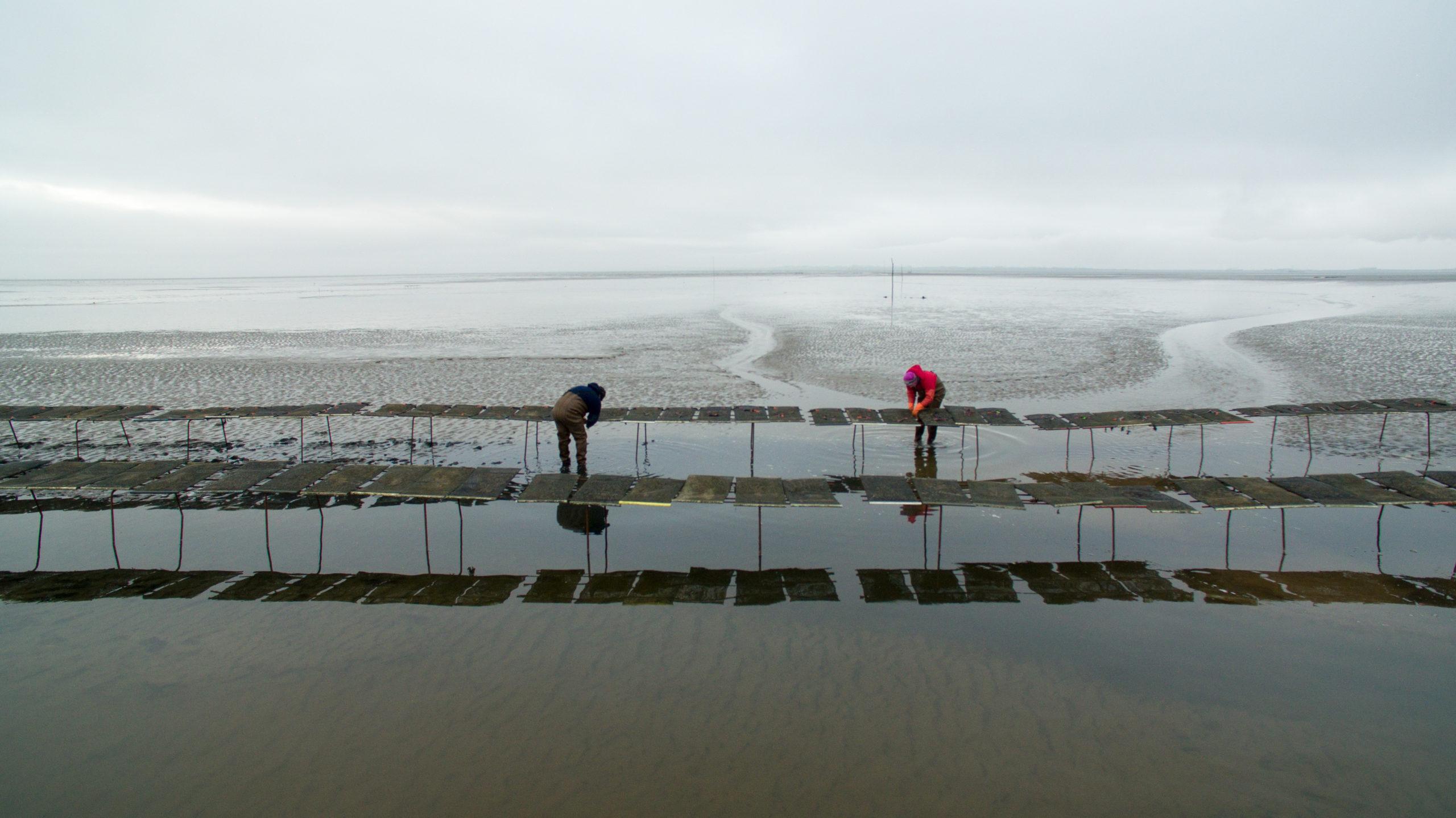 Cromane Bay Shellfish Farm