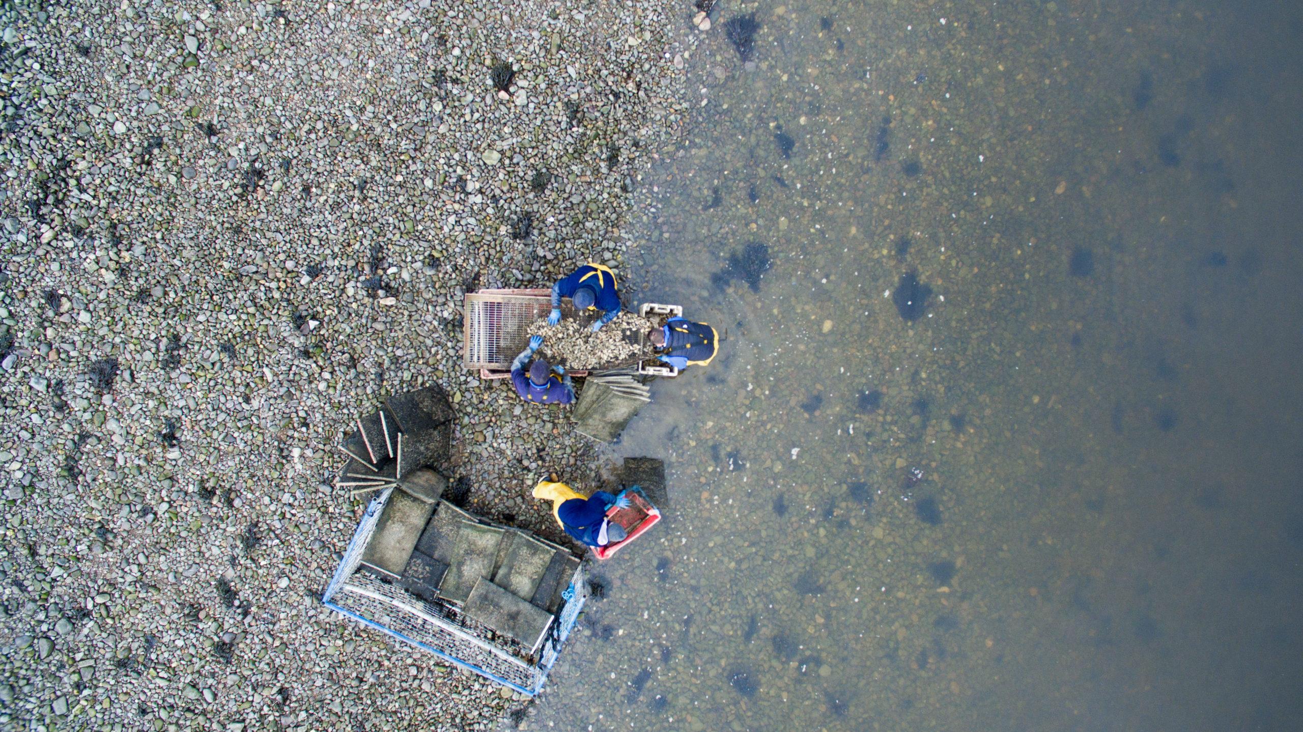 Cromane Bay Shellfish Oyster Grading Aerial Shore