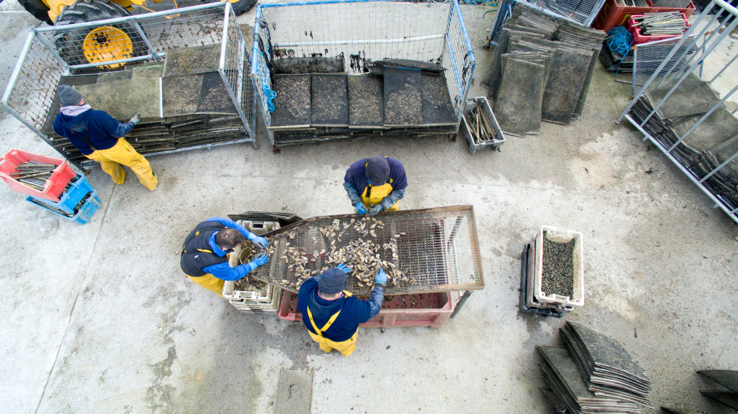 Cromane Bay Shellfish Oyster Grading Aerial