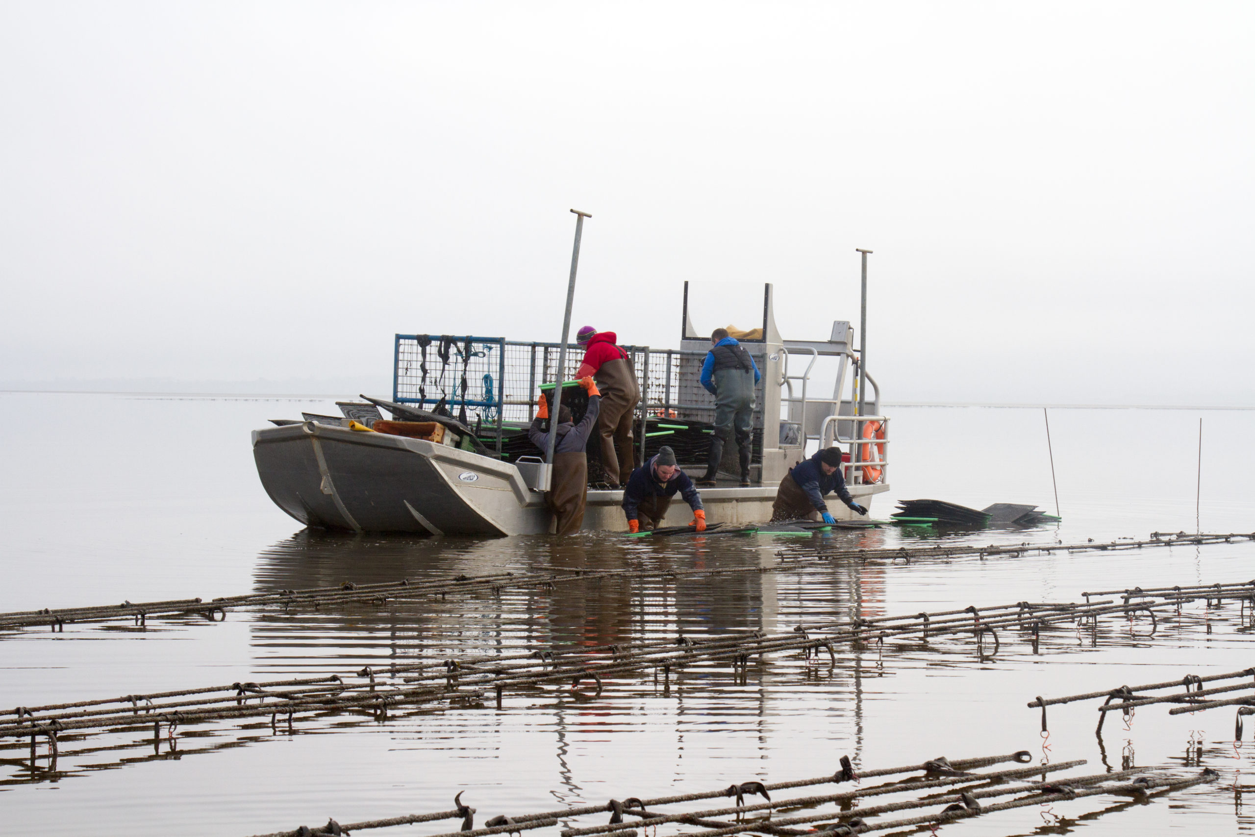 Cromane Bay Shellfish Team Taking Oysters for Grading on Boat