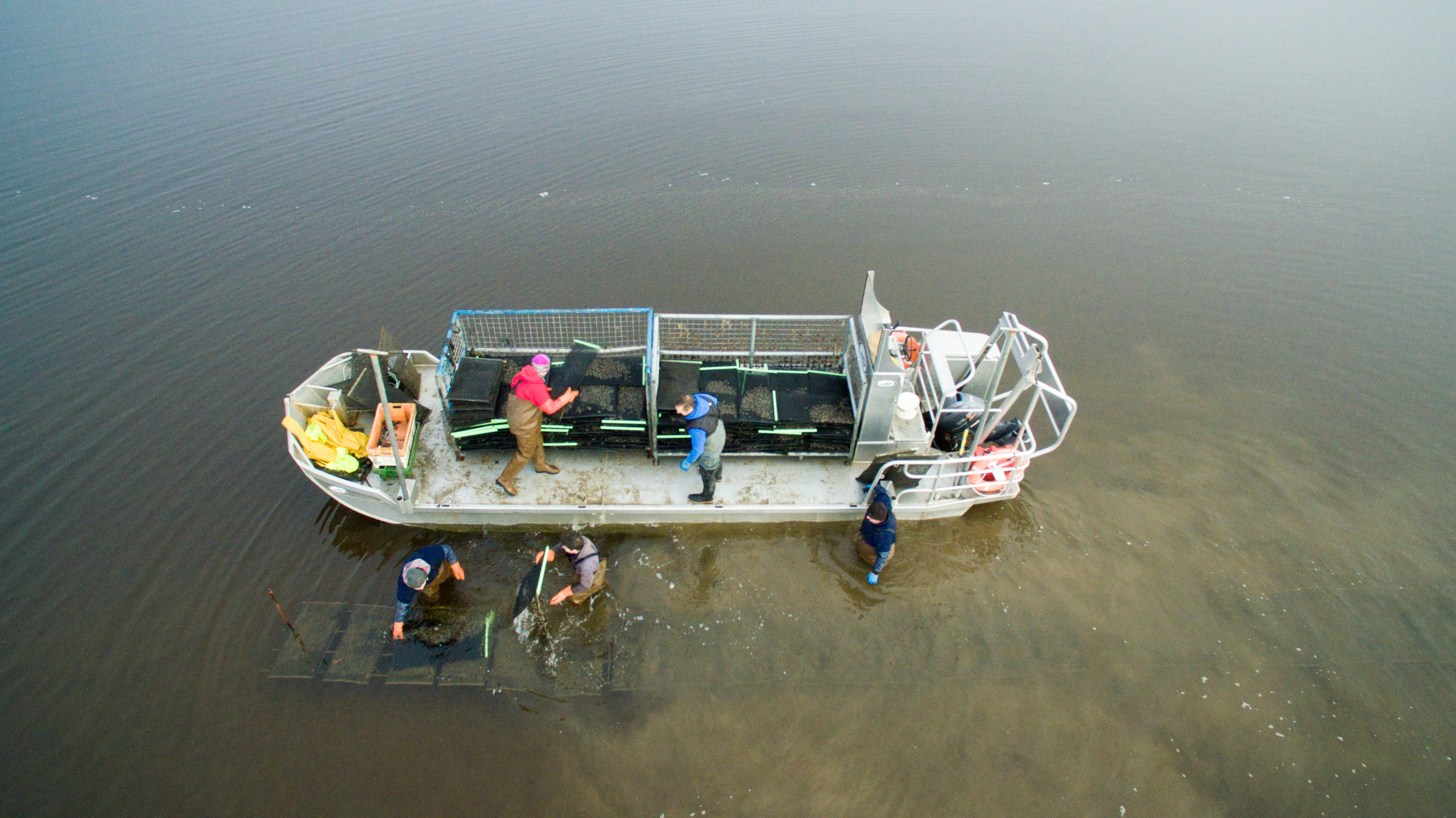 Cromane Bay Shellfish Team working on Oyster Farm