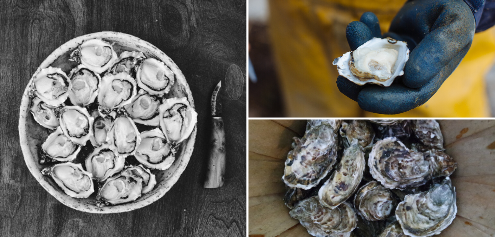 Cromane Bay Oysters Collage