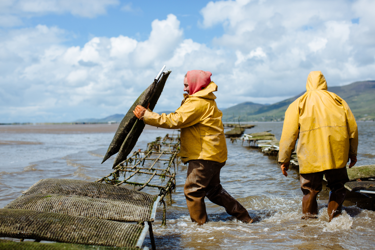 Cromane Bay Shellfish Oyster farm shaking oyster bags@edschofieldphoto
